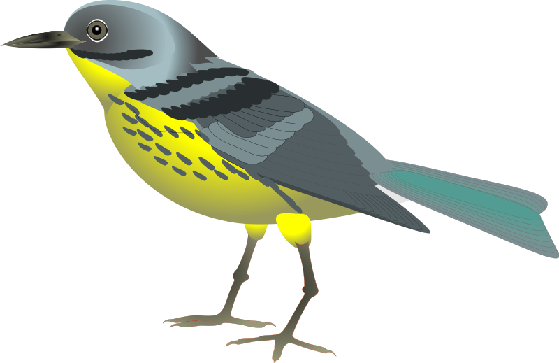 Bird Graphics Png