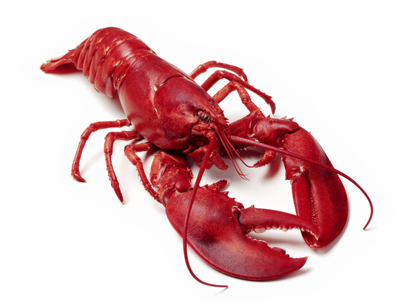 Boiled Lobster Free Images At Clker Vector Png