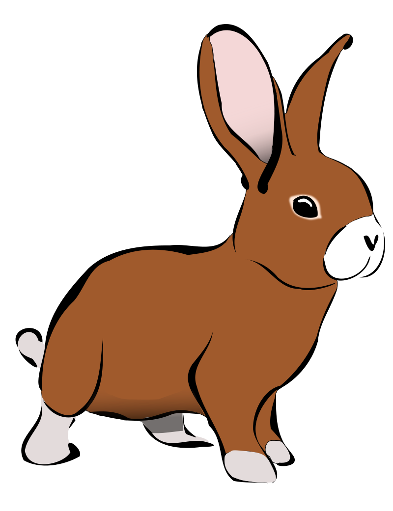 Bunny Png Pictures