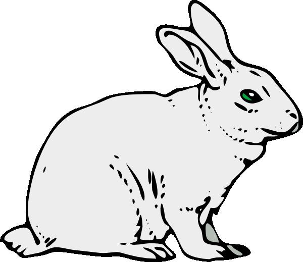 Bunny Rabbit Png