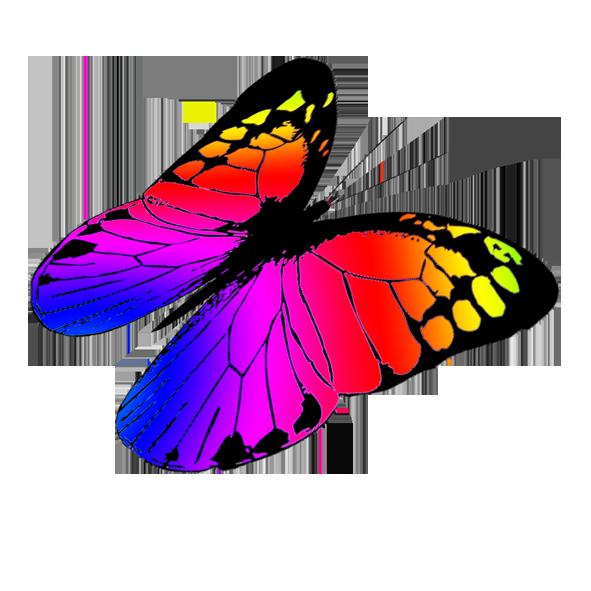 Butterflies Butterfly Png 6