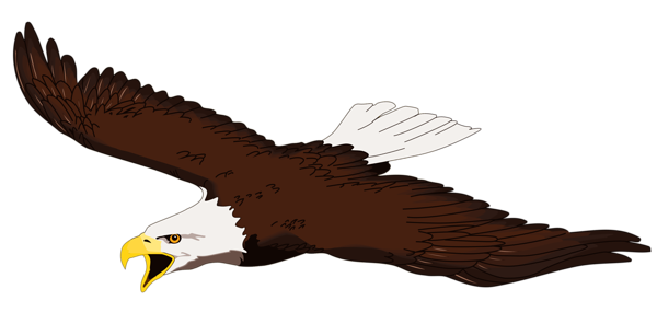Eagle Gallery Free Pictures png