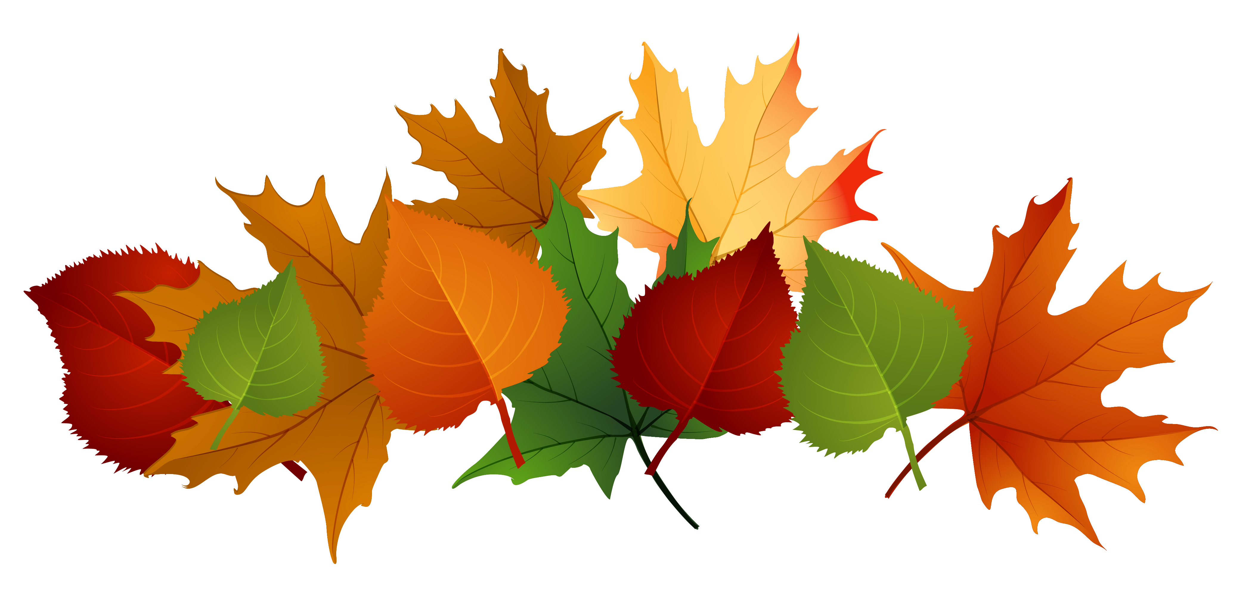 Fall Leaves Fall Leaf Png No Background Free Images