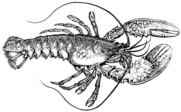 Free Lobster Png 1 Page Of Public Domain Png