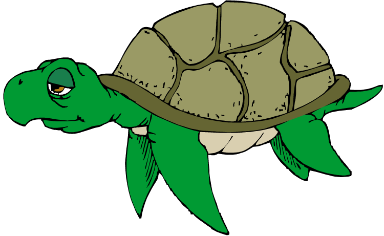 Free Turtle Png 2