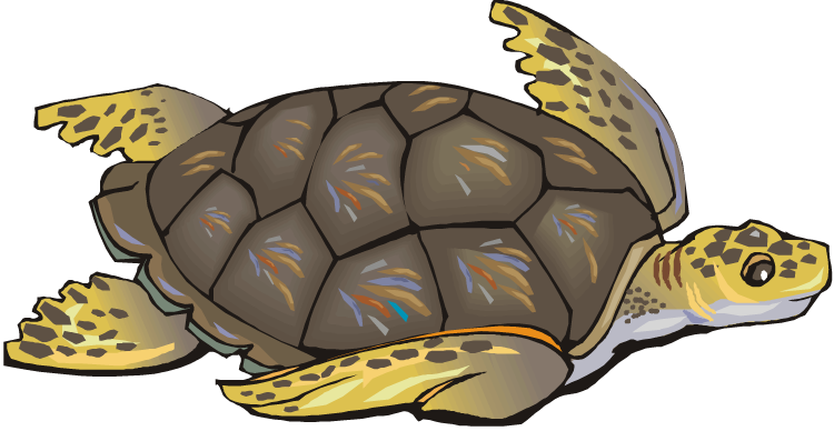 Free Turtle Png