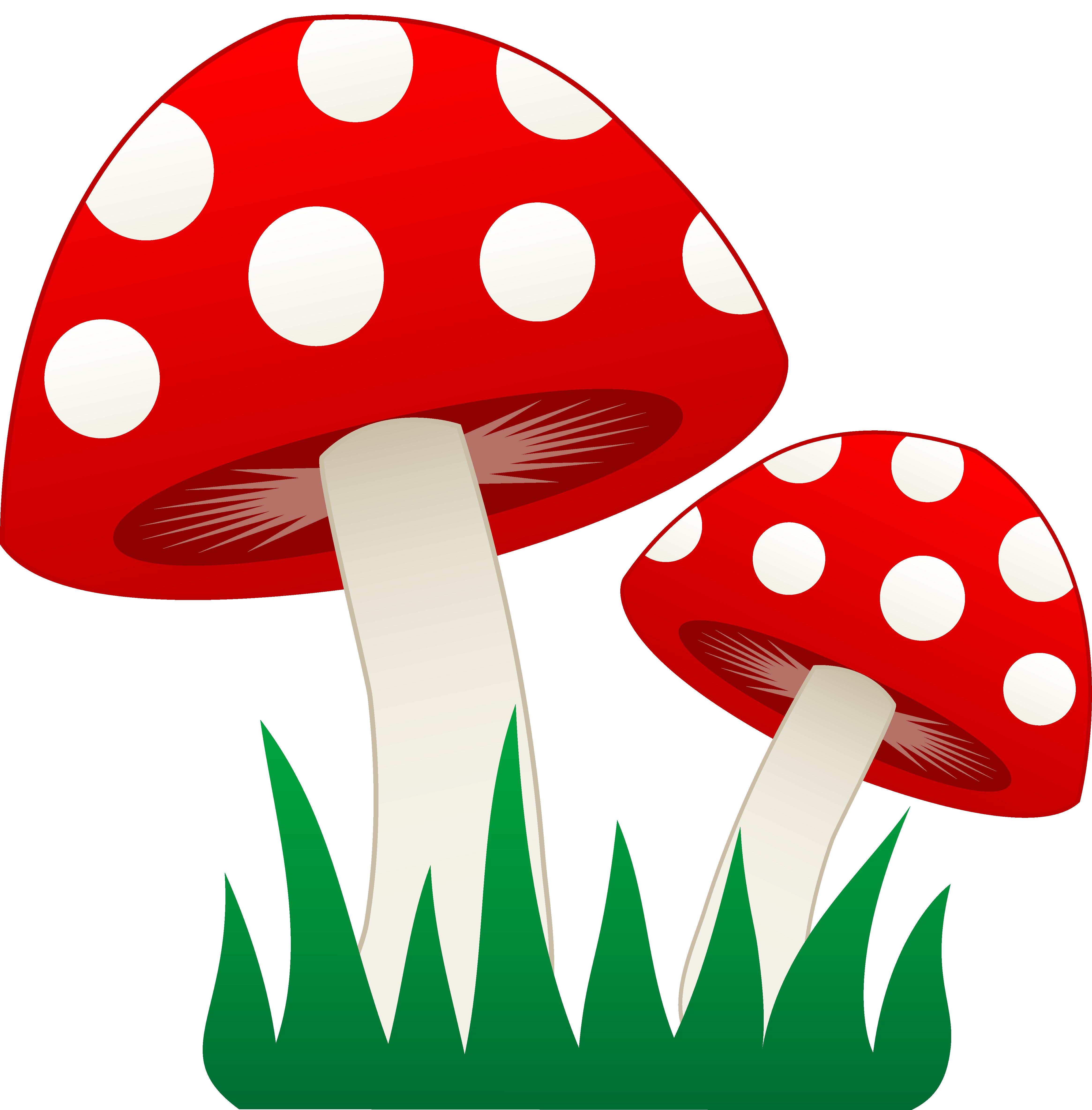 Fungi PNG
