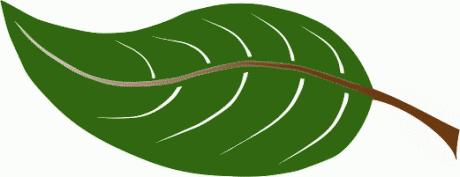 Leaves Leaf Png Free Png Images 3