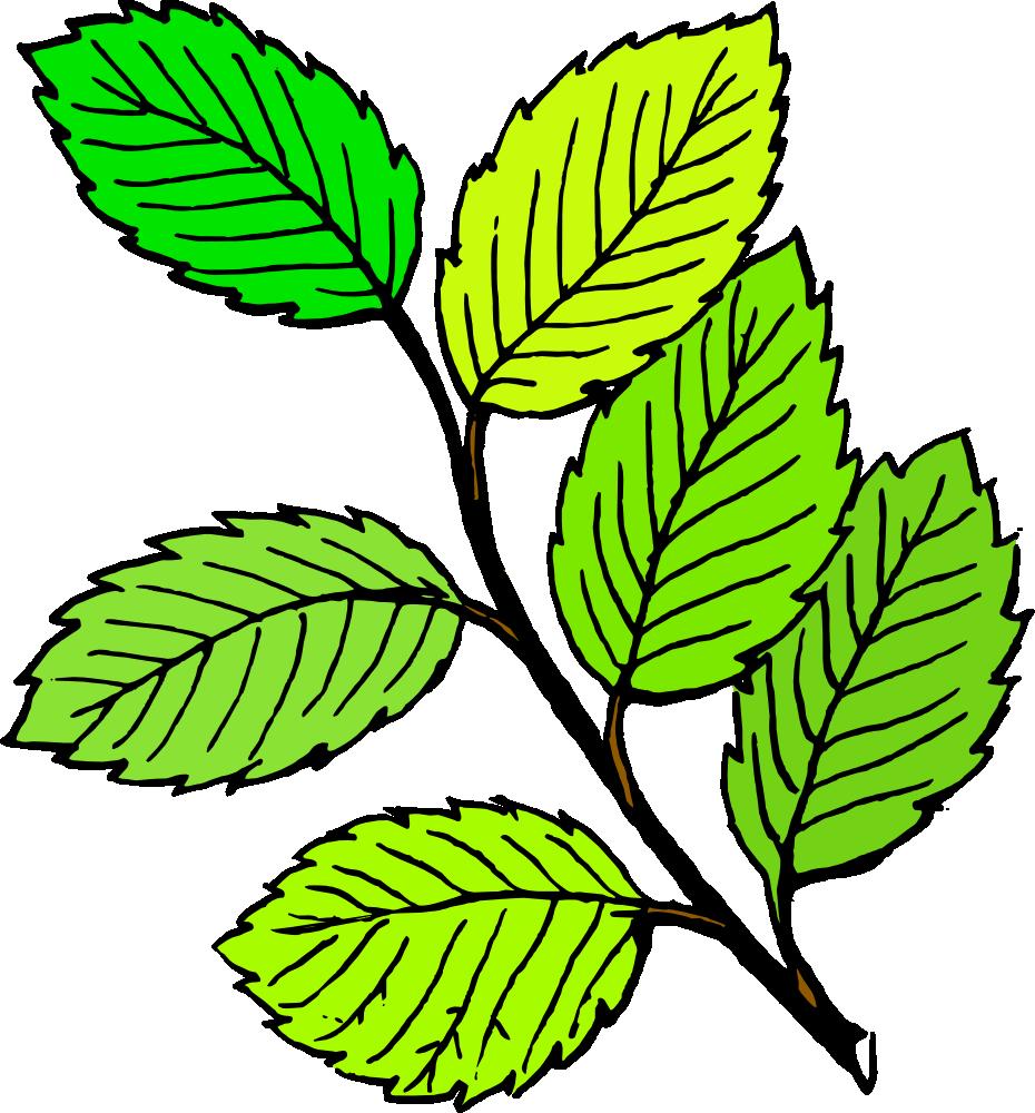 Leaves Leaf Png Free Png Images 4