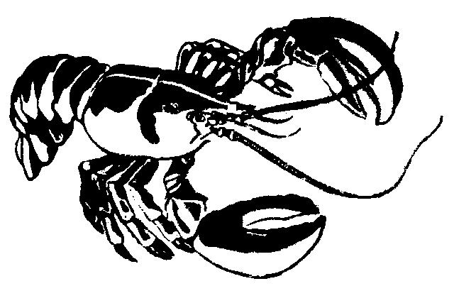 Lobster Png 19