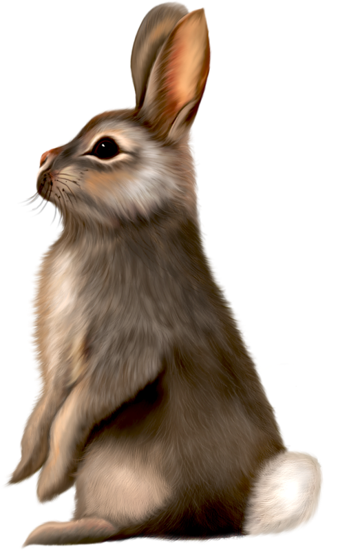 Painted Brown Bunny Png 0