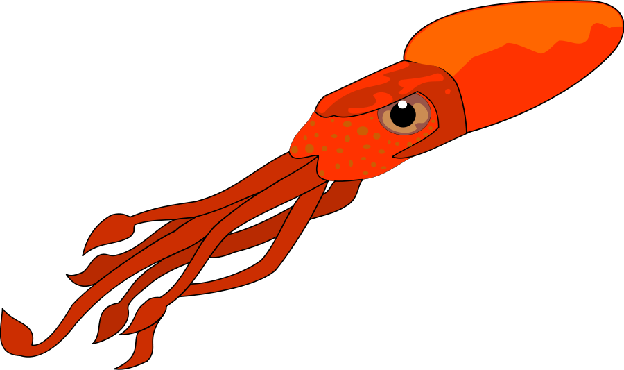 Squid PNG