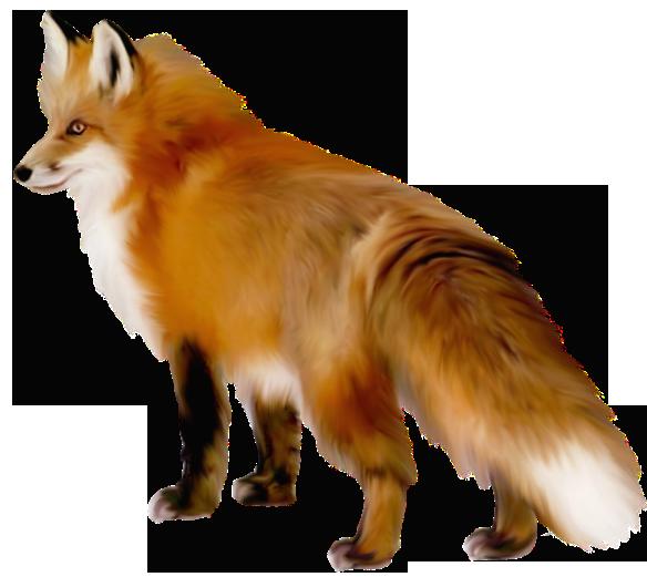 Transparent Fox Png 0