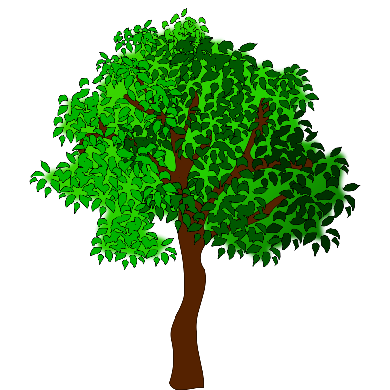 Trees Free To Use Png