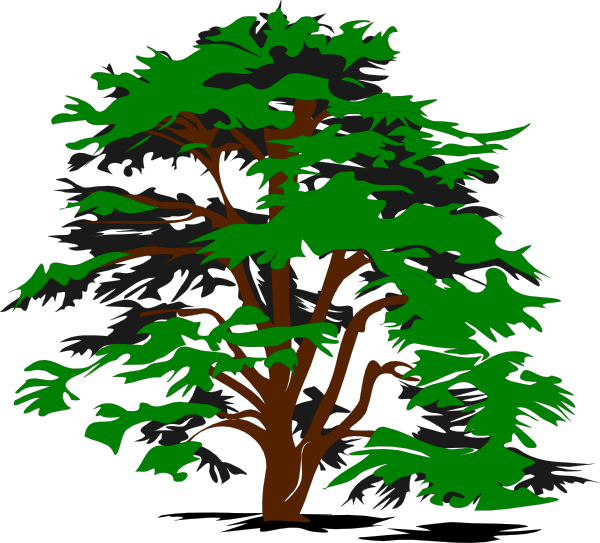 Trees Jungle Tree Png Kid