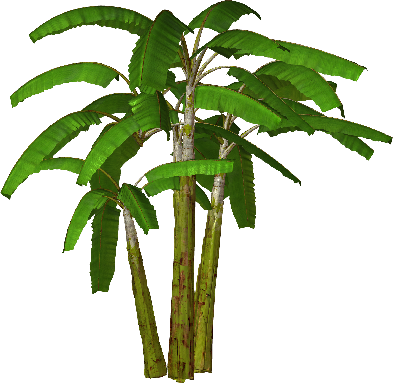 Trees Palm Tree Png Printable Free Png Images