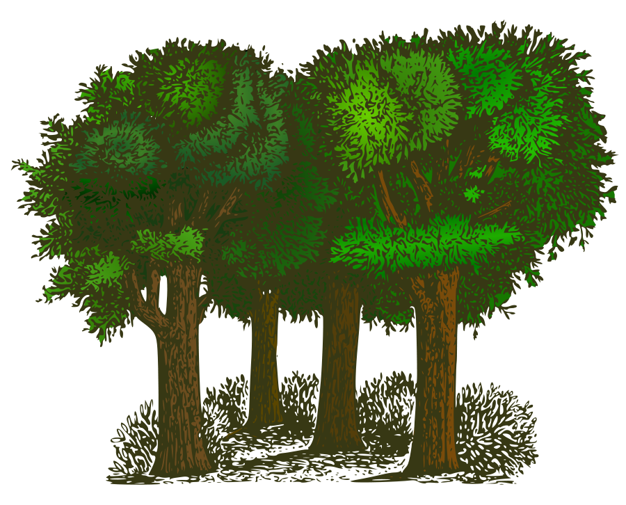 Trees Png 2