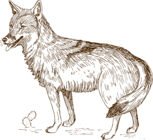Wolf 9 Png At Clker Vector Png