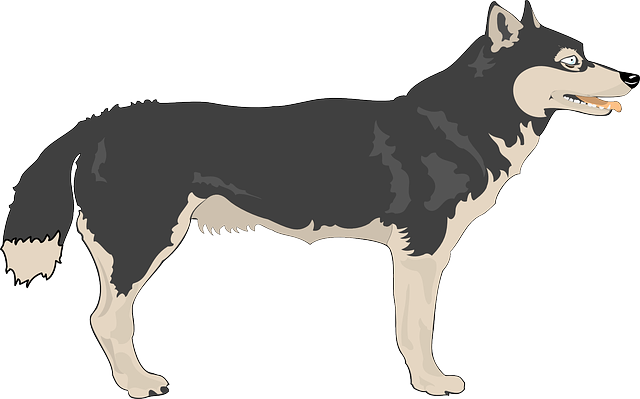Wolf Free To Use Png