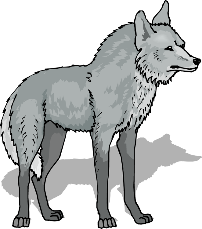 Wolf Png 4