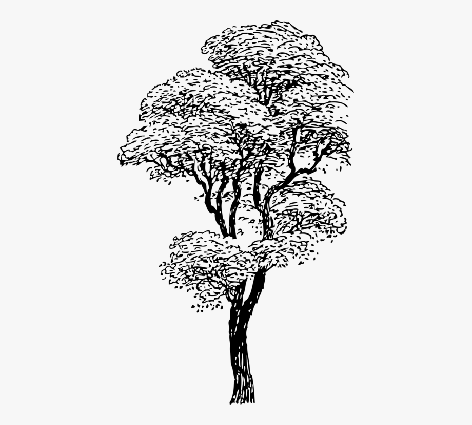Black And White Tree Eucalyputs Png