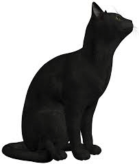 Black Cat For Animal Png