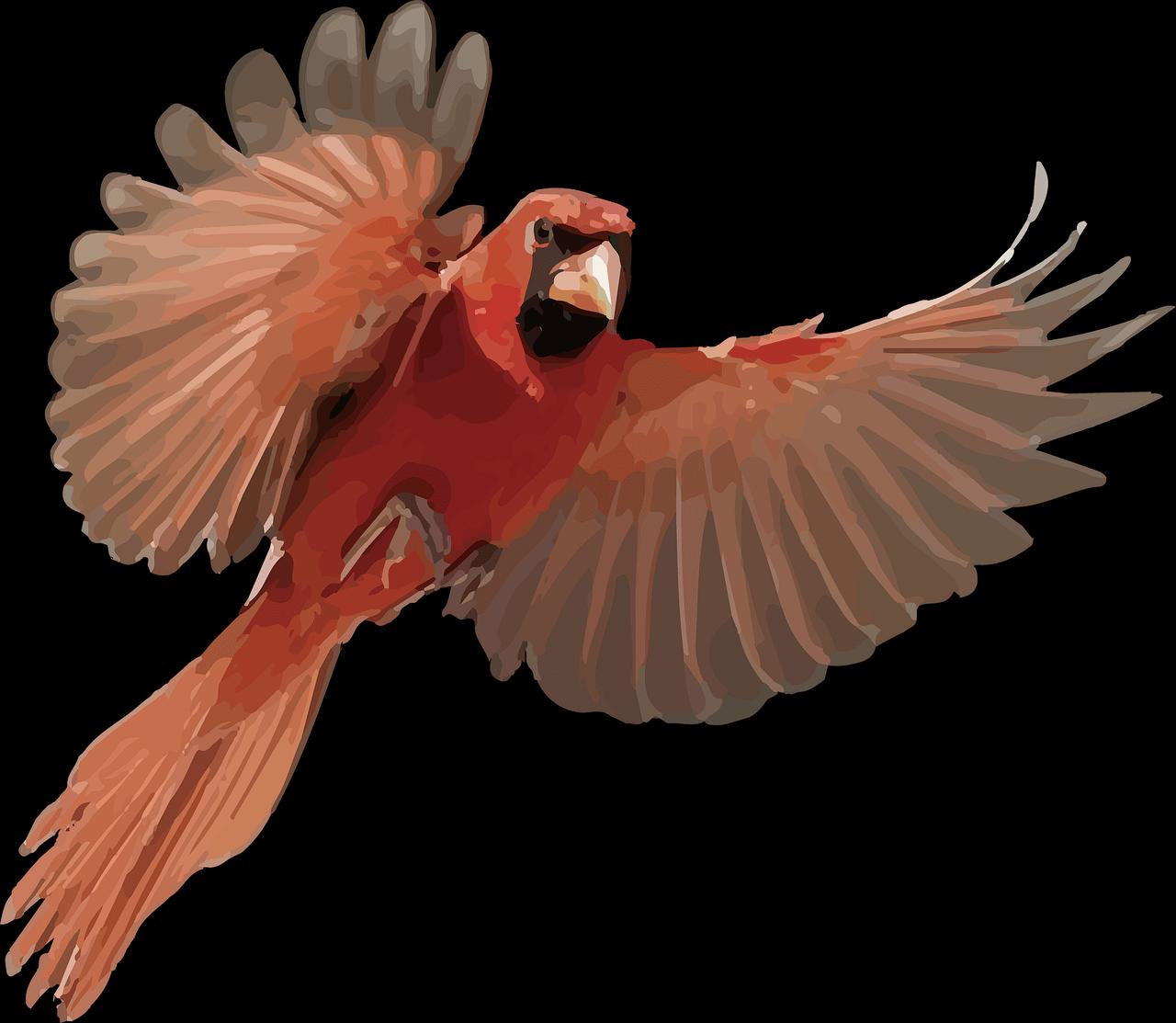 Cardinal Bird Free Image On Pixabay Png