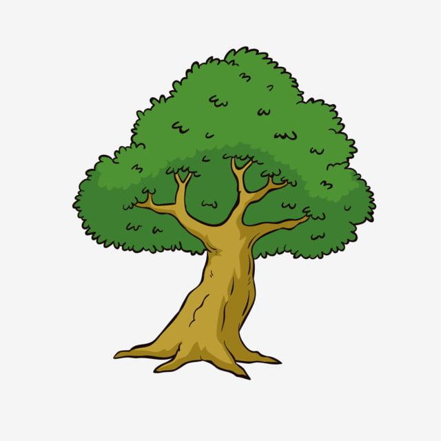 Dark Green And Brow Tree Eucalyptus Png