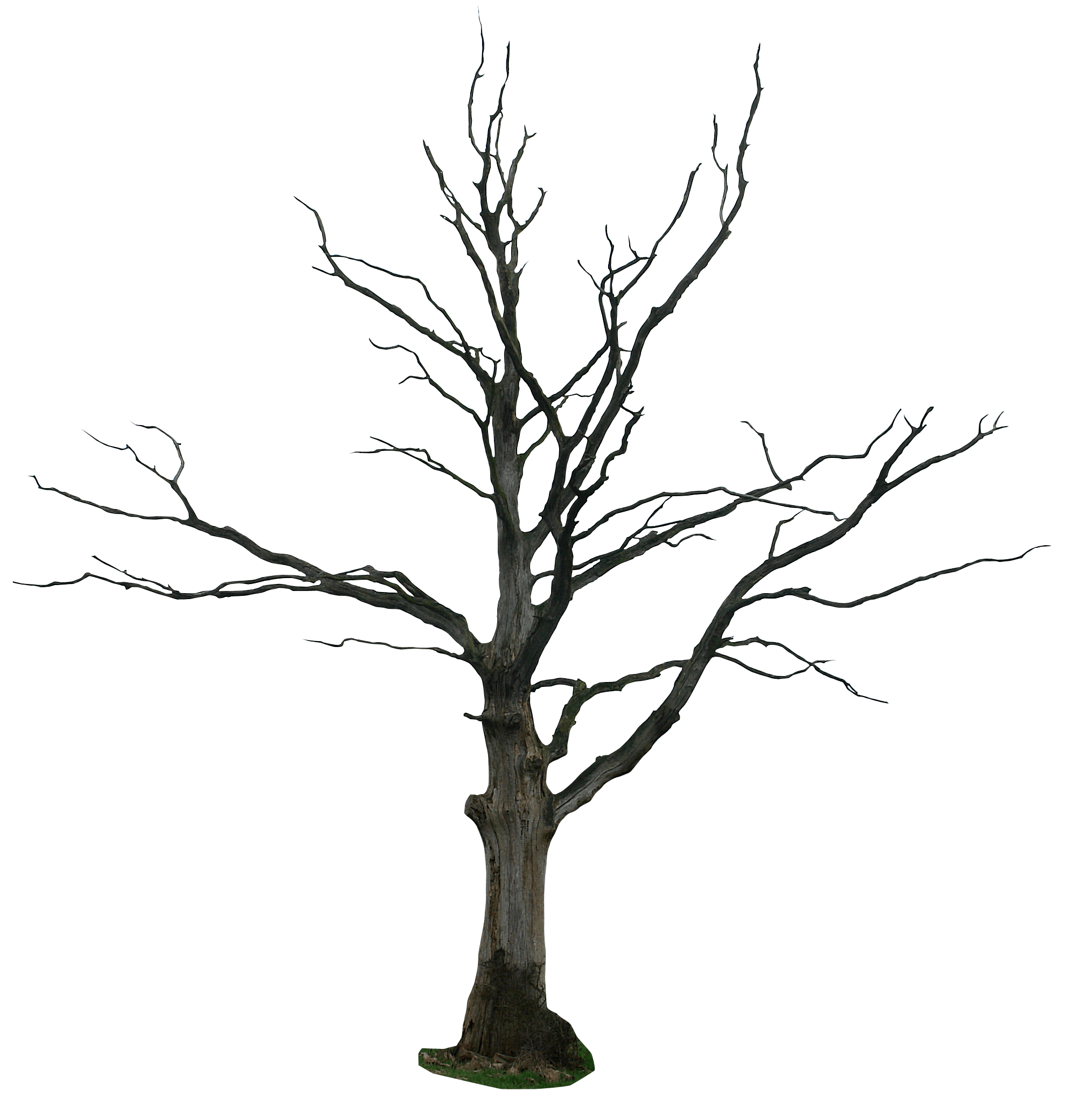 Dead Tree At Vector Png