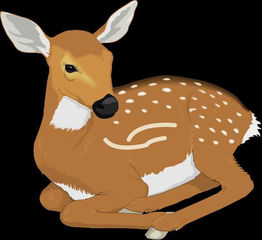 Deer Animal Png