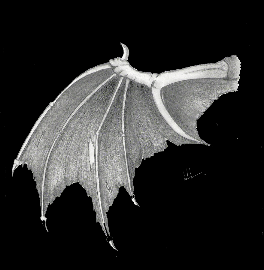 Dragon Wing Free Idea png