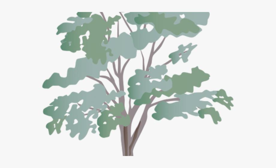 Eucalyptus Free Graphics Png