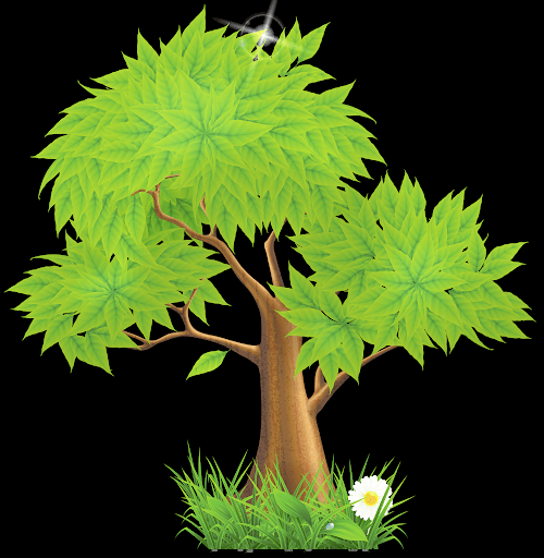 Eucalyptus Tree Free Images Png