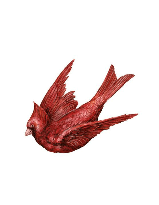 Flying Cardinal Free Download Png