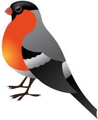 Free Cardinal Png