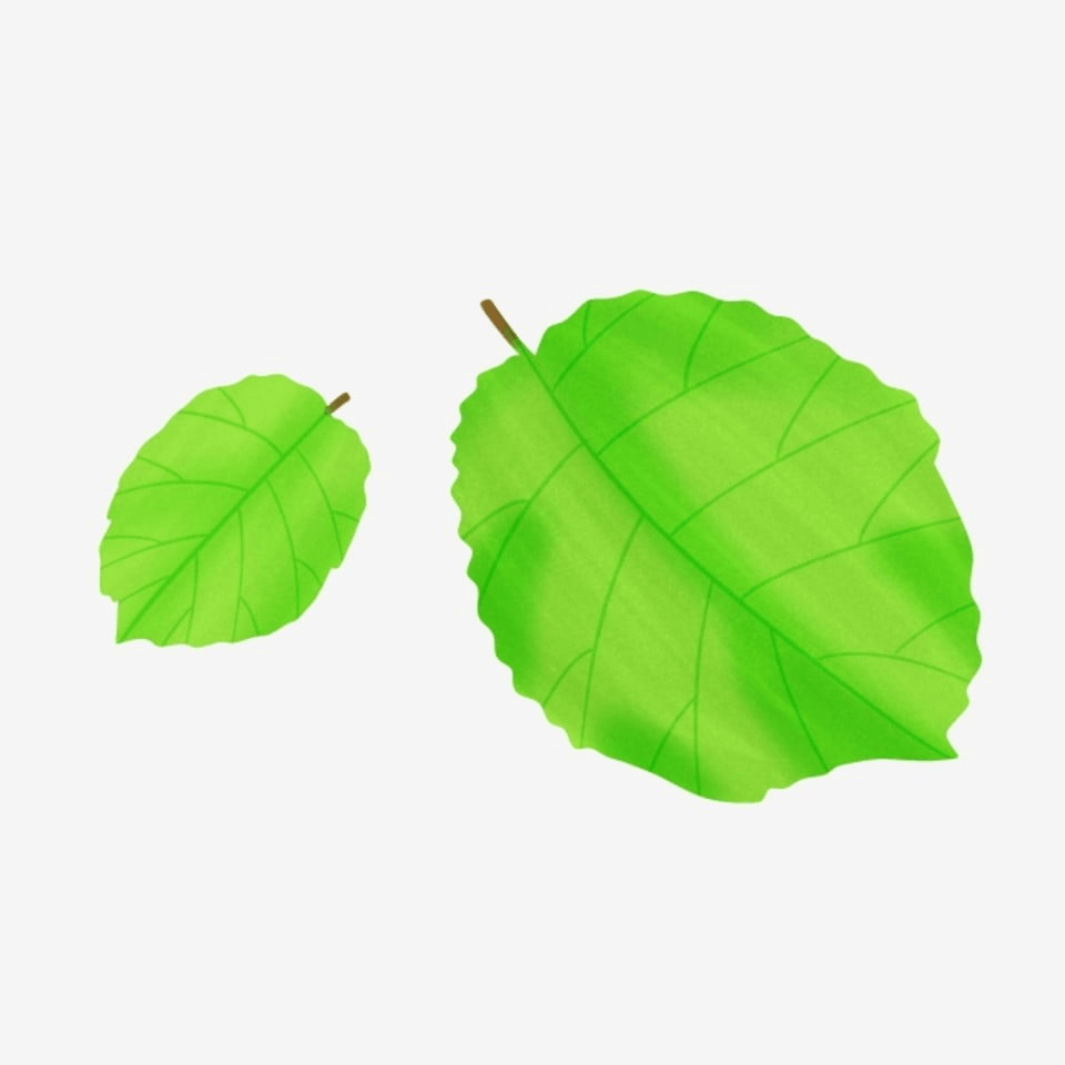 Green Ecucalyptus Leaves Free Idea Png