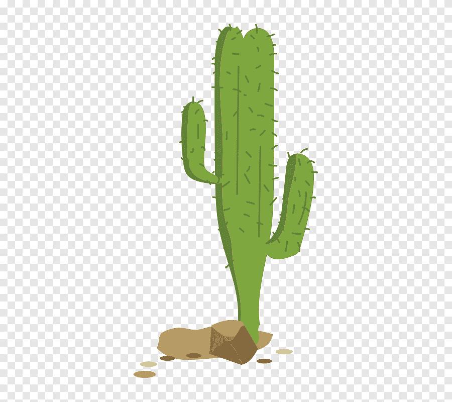 Hd Cactus Png