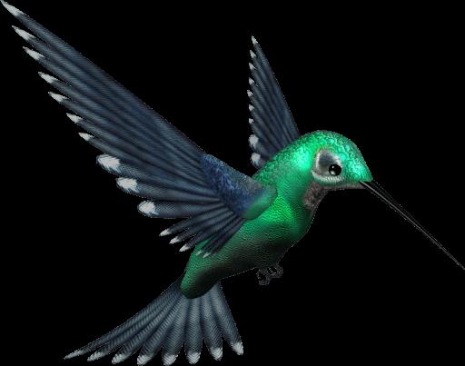 Hummingbird PNG