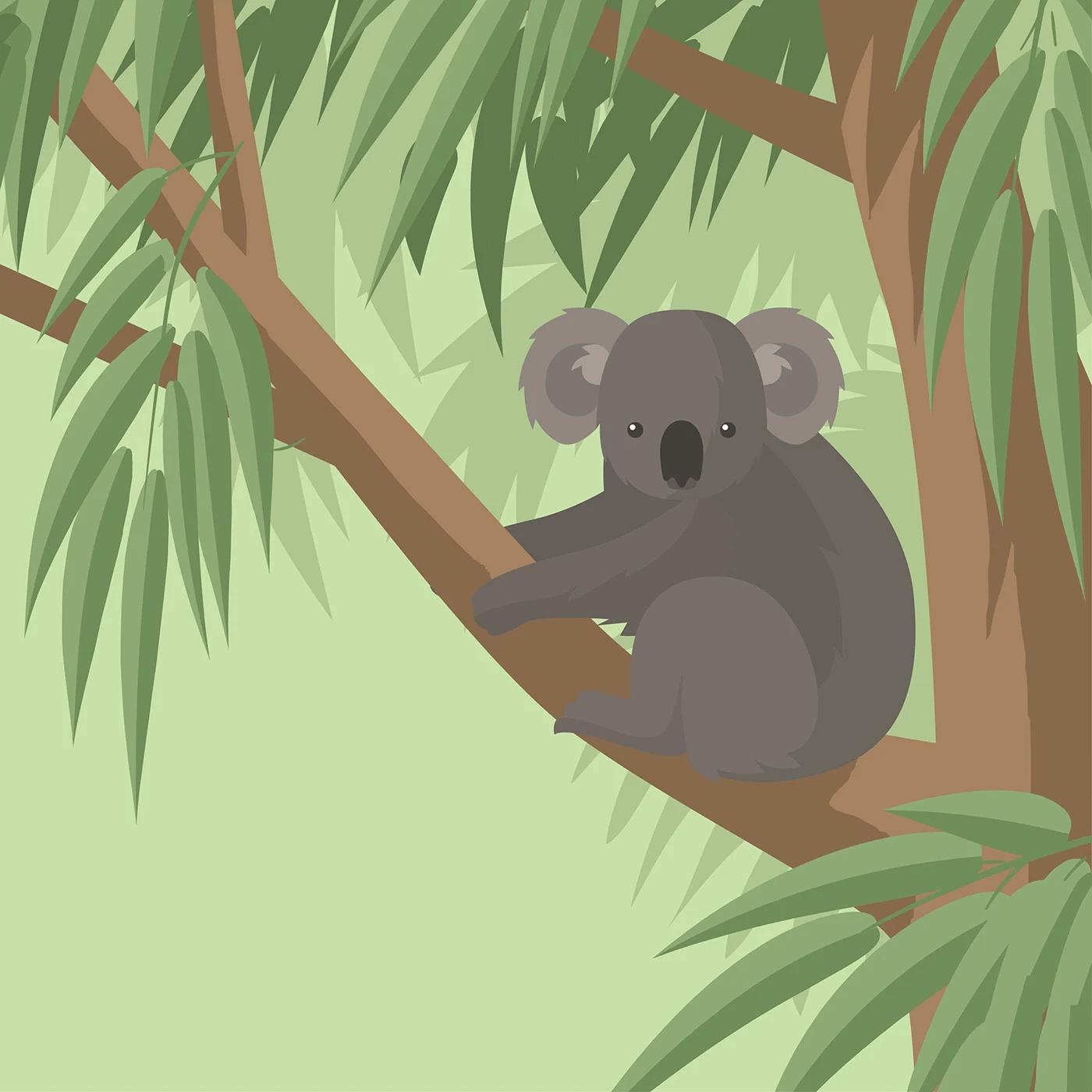 Koala In Eucalyptus Tree Png