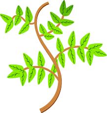 Leaf Eucalyptus Free Idea Png