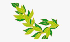 Leaf Eucalyptus Free Images Png