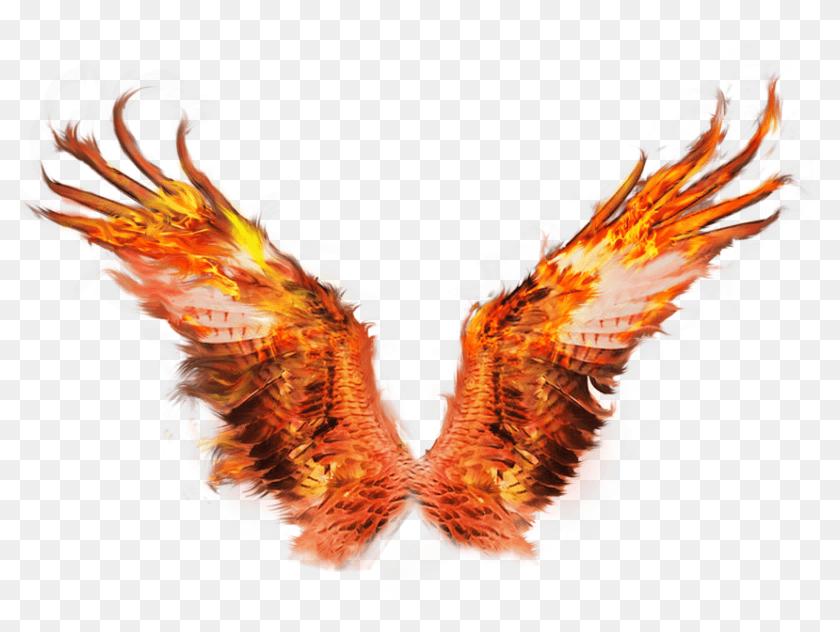 Phoenix Fire Wing png