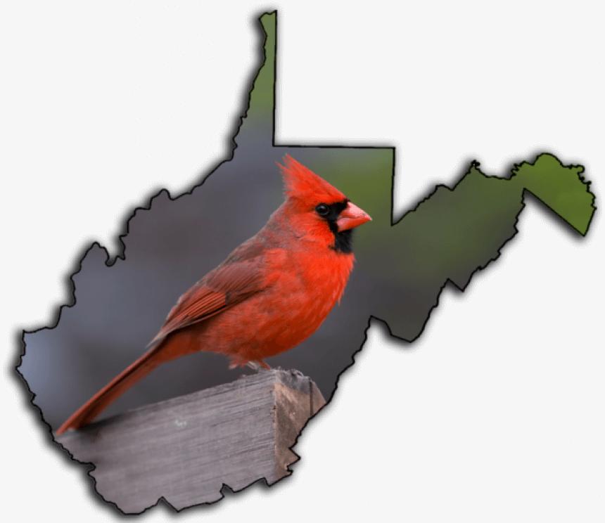 Transparent Cardinal Bird Png