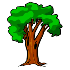 Tree Cartoon Eucalyptus Png
