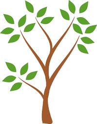 Tree Eucalyptus Free Graphics Png