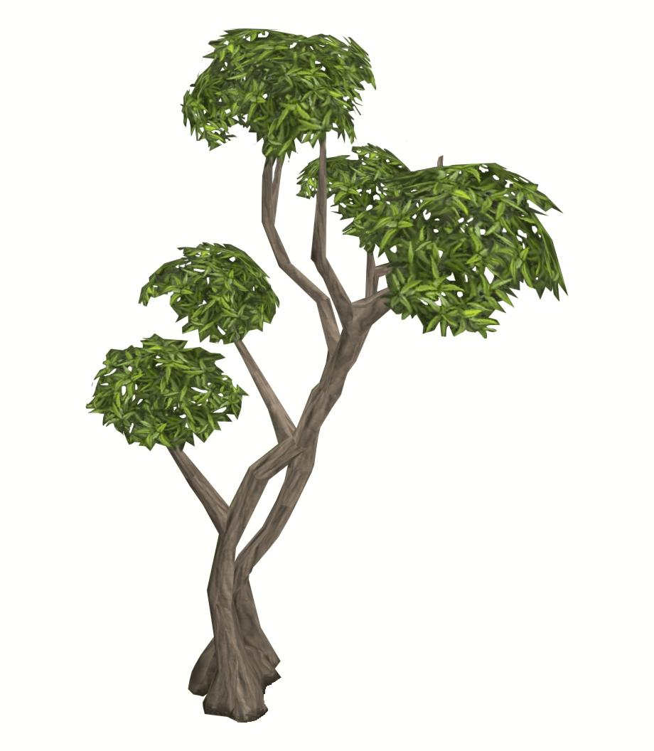 Eucalyptus PNG