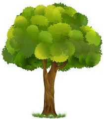Tree Eucalyptus Free Images Png