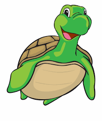 Turtle Free Vector Png