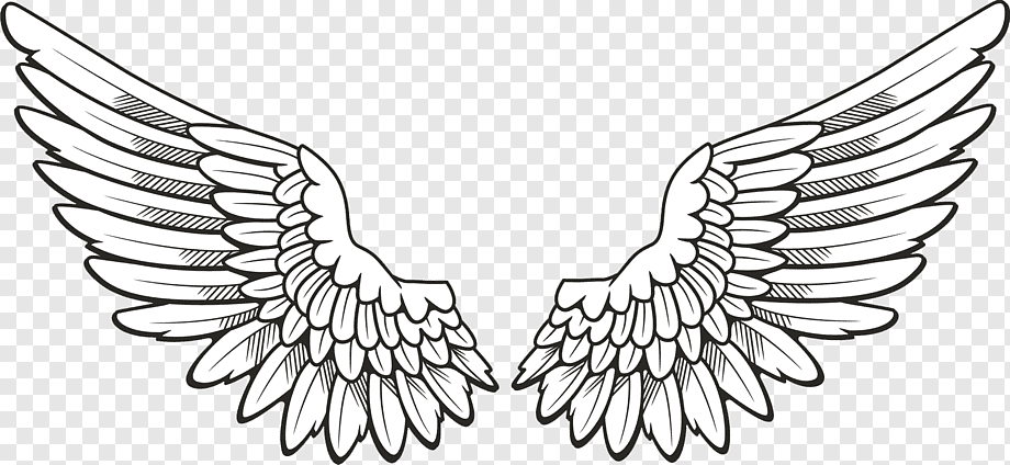 White Angel Wing png