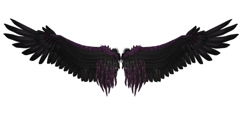 Wing Free Graphics png